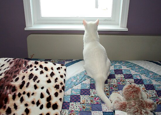 I am NOT going out in that Snow, they won't see ME, by AnnDixon