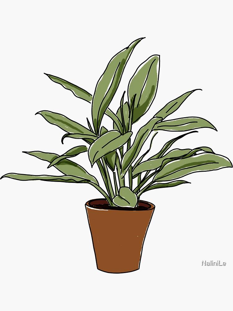 House Plant Illustration by NaliniLe
