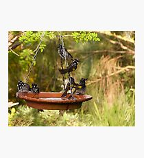 I'ts Bath Time! New Holland Honeyeaters, Mount Pleasant. S.A. Photographic Print