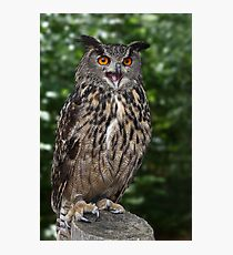 Eurasian Eagle-Owl Photographic Print