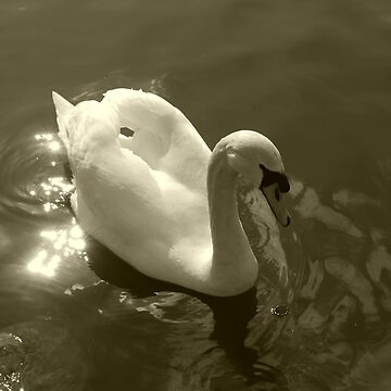 The Lonely Swan by Nimi