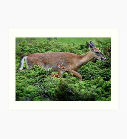Mother and child reunion - White-tailed Deer Art Print