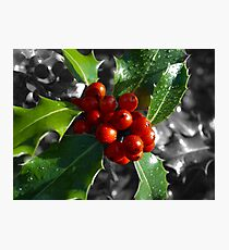 Holly Tree Photographic Print