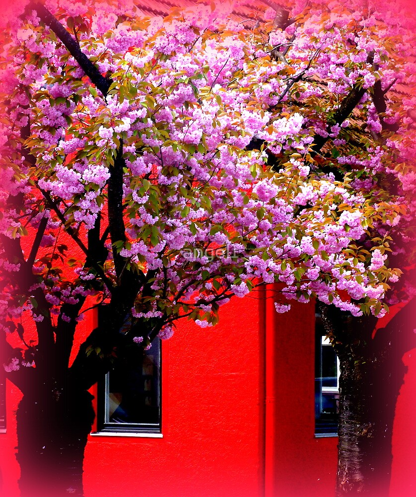 Red & Pink by ©The Creative  Minds