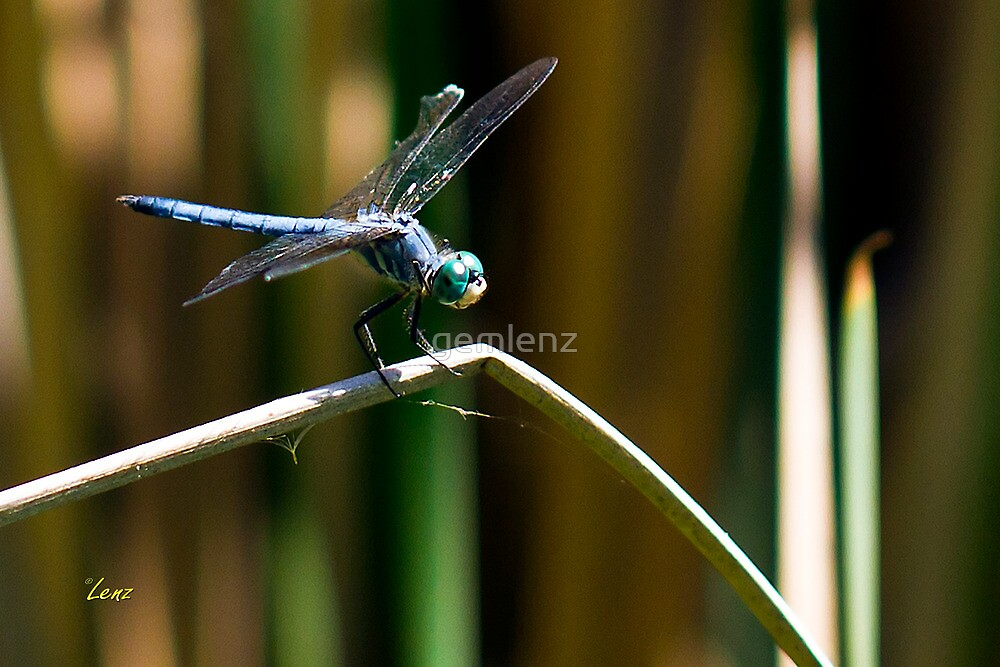 Blue Wings by George Lenz
