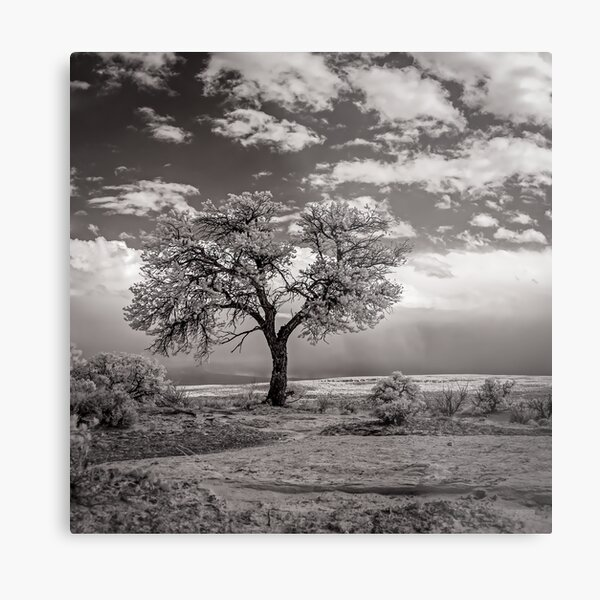The Last Tree (square crop) Metal Print