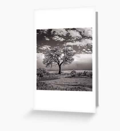 The Last Tree (square crop) Greeting Card