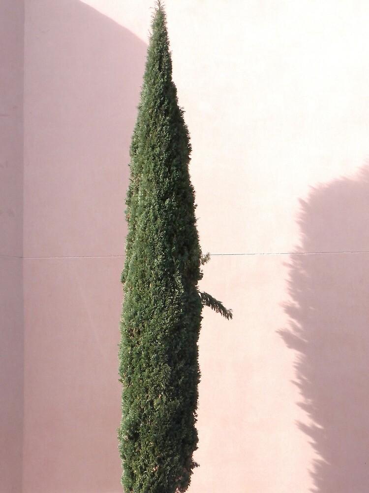 Cypress by ZASPHOTOS