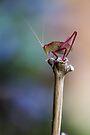 Sitting Pretty on a Stick by yolanda