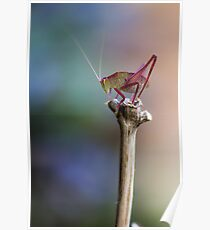 Sitting Pretty on a Stick Poster