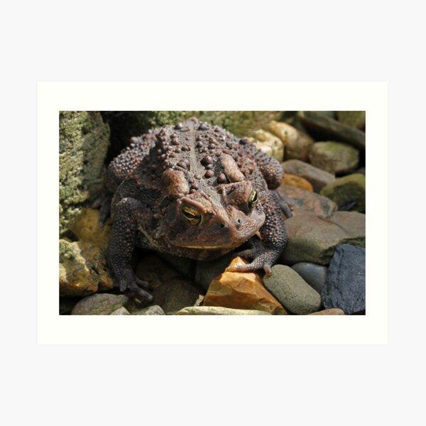Toad of the Garden Art Print