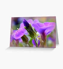 Light on Purple Greeting Card