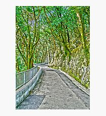 Victoria Peak path HDR Photographic Print