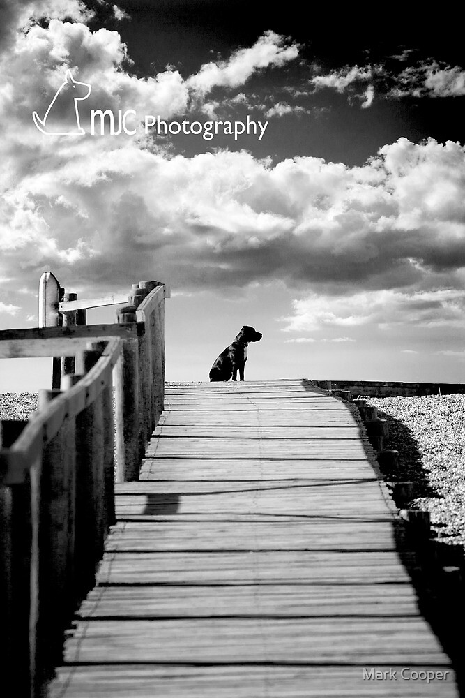 Alfie on Holiday by Mark Cooper