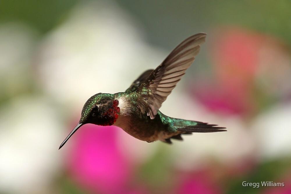 Spring Hummingbird... by Gregg Williams