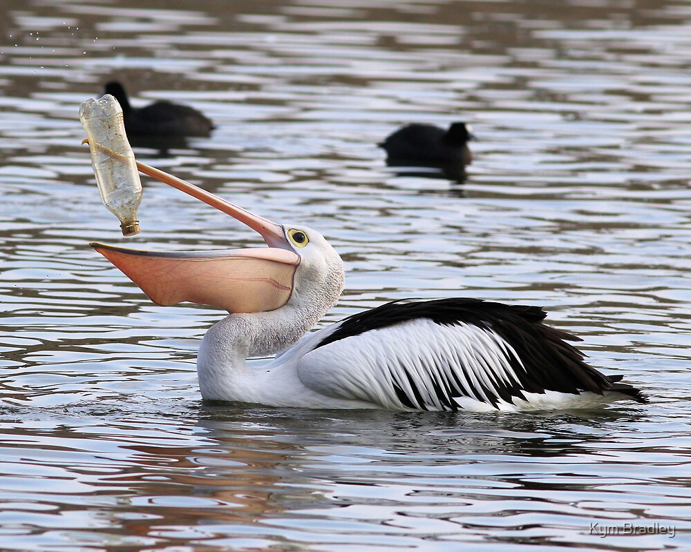 There Has To Be ONE Last Drop  ~ Pelican ~ by Kym Bradley