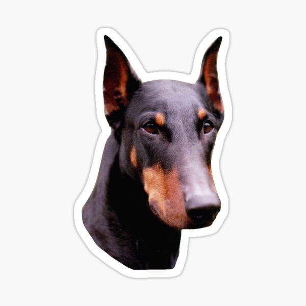 Pretty Black Doberman Pinscher Face  Sticker