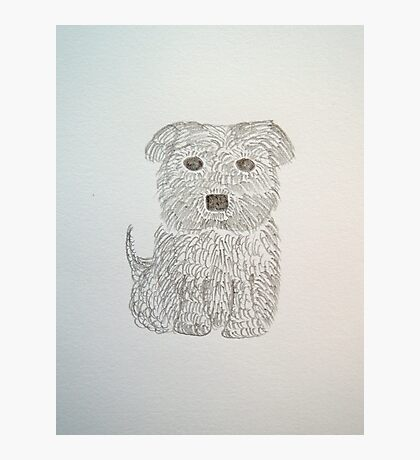 Tiny Terrier Photographic Print