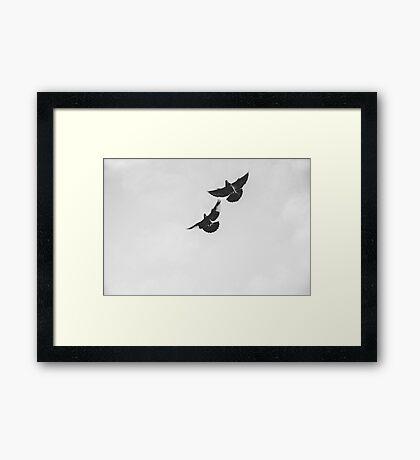 Kelham Island Pigeons At Dawn Framed Print