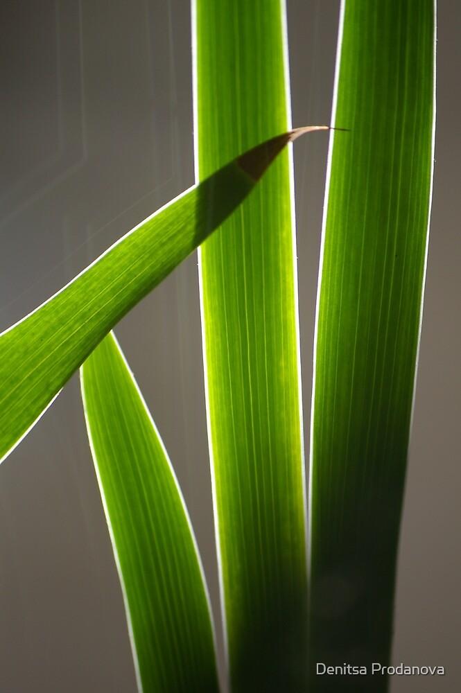 Backlit Leaves by Denitsa Prodanova