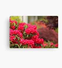 Gardening in Red Canvas Print