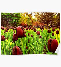 Tulips in the Park 2 Poster