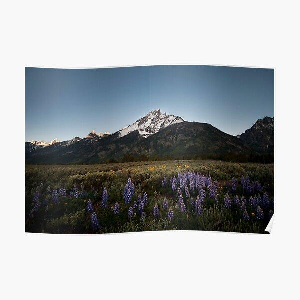 Grand Teton National Park in Spring Poster