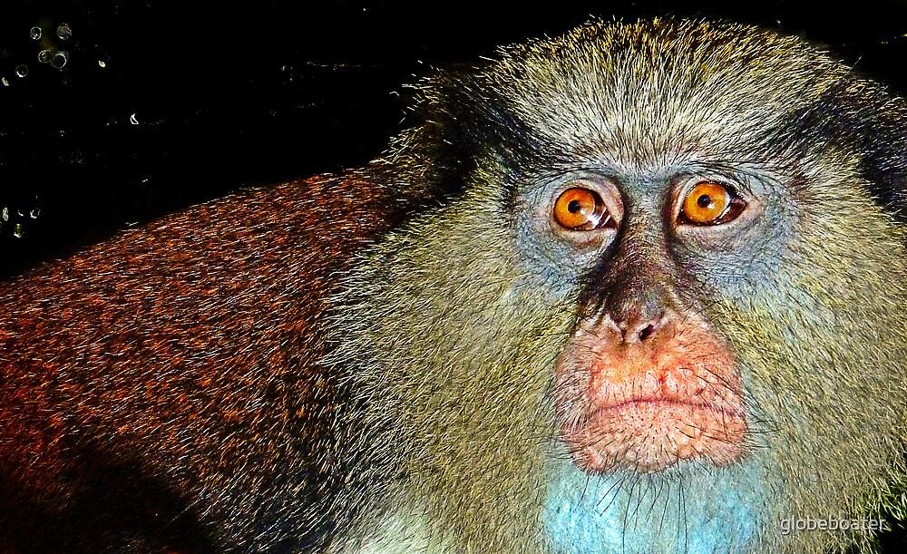 Mona Monkey by globeboater