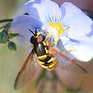 Hoverfly on Wild Blue Flax by Arla M. Ruggles