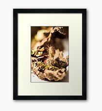 Cactus Bonsai Framed Print