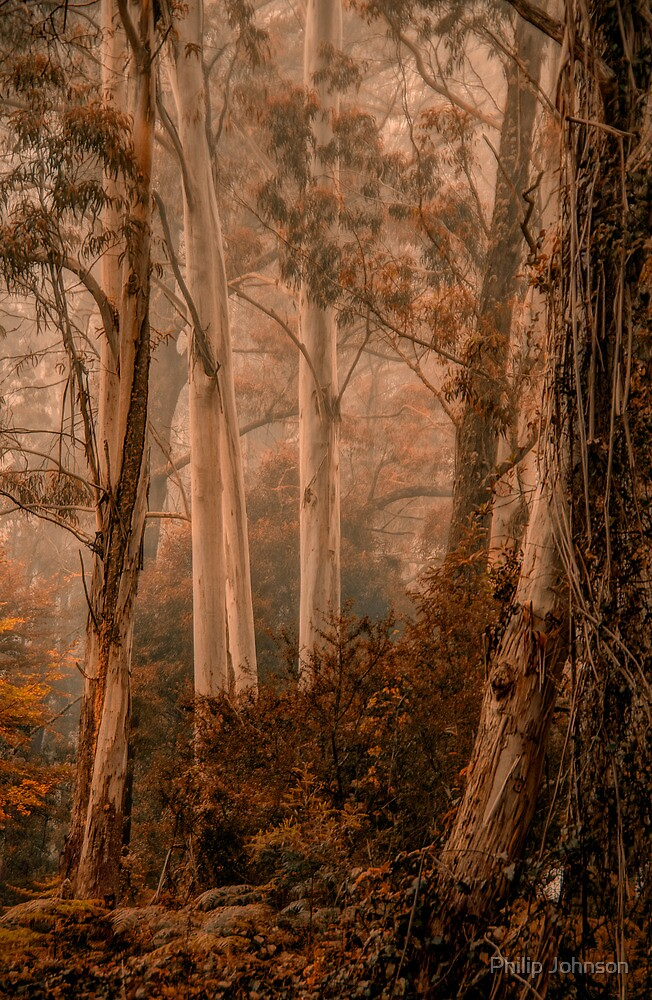 The Love of Trees   - Mount Wilson - NSW  - The HDR Experience by Philip Johnson