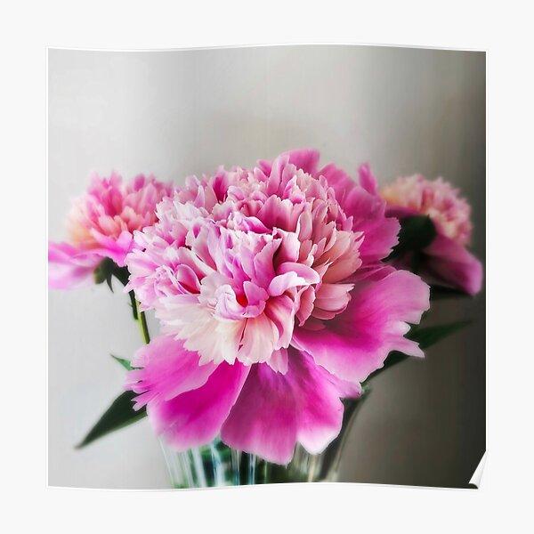 Gift for Gardener - Pink Peonies Poster
