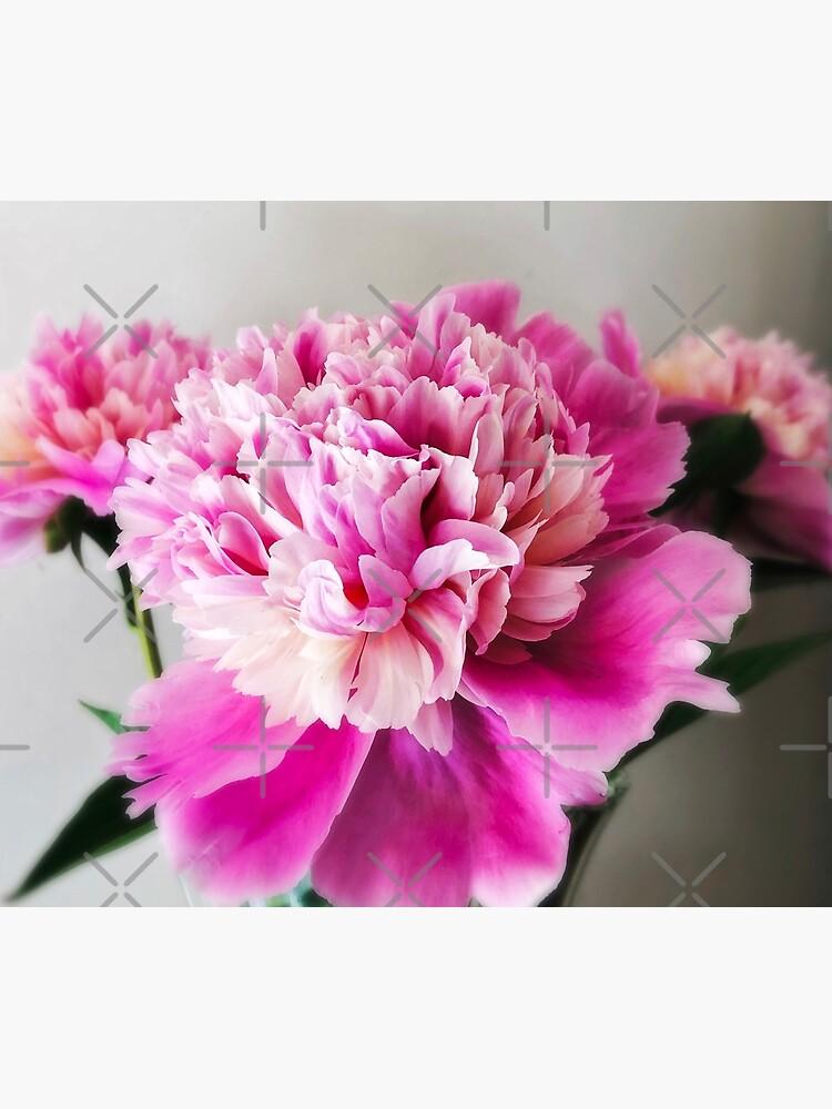 Gift for Gardener - Pink Peonies by OneDayArt