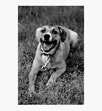 Molly In The Grass I Photographic Print