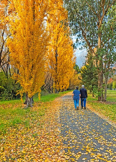 The Poplar Trail by Mark  Lucey