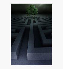 Tree into the maze Photographic Print