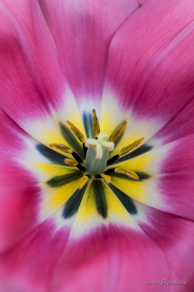 Heart of Pink Tulip. The Tulips of Holland by JennyRainbow
