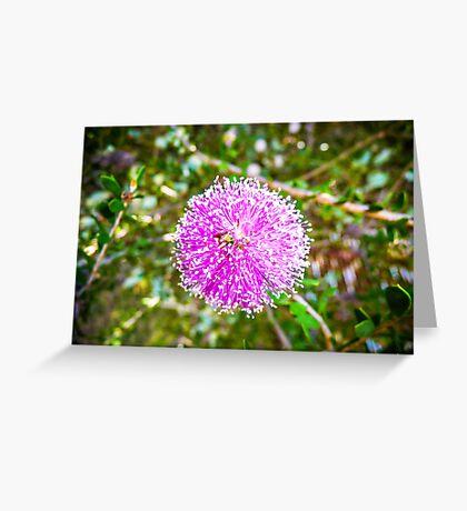Melaleuca Nesophila Greeting Card