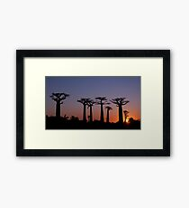 Baobab Alley, Madagascar Framed Print
