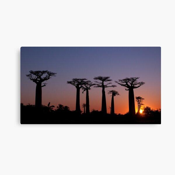 Baobab Alley, Madagascar Canvas Print