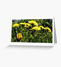 Spring Dandelions Greeting Card