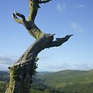 Dartmoor Tree by Sally Barnett