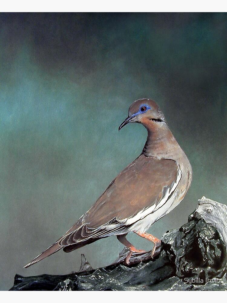 White Wing Dove by Gypsybilla