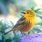 Mellow Yellow Fellow by Arla M. Ruggles