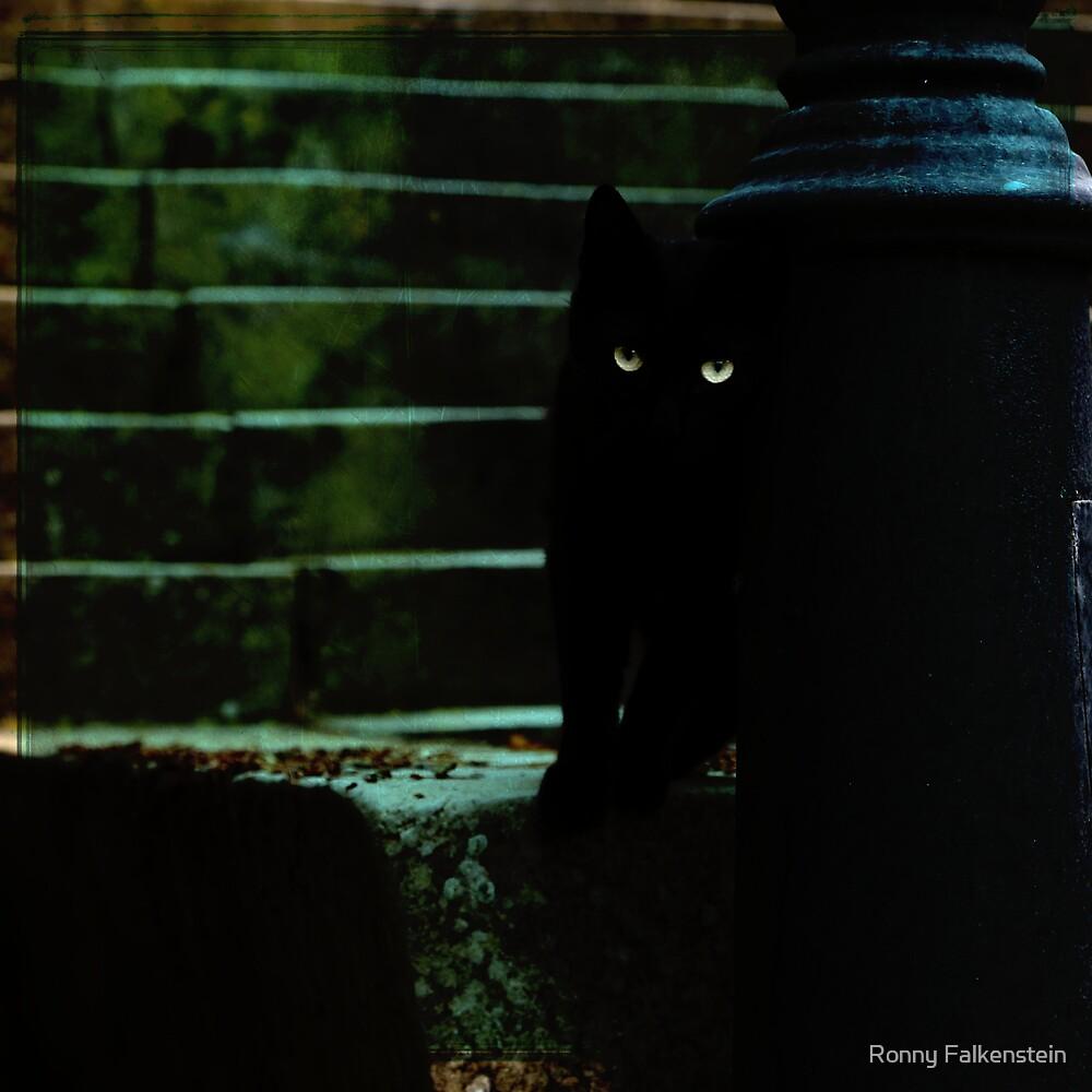 Black cat ;) by Ronny Falkenstein