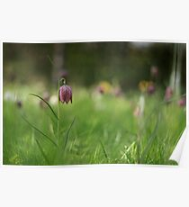 Standing alone, snakes head fritillary at Downton Abbey Poster