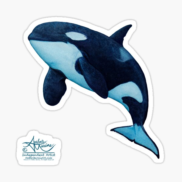 """""""The Matriarch"""" by Amber Marine ~ killer whale / orca watercolor painting, (J2 Granny) art © 2016 Sticker"""