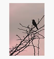 Sunset Song ~ Photographic Print