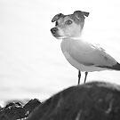 Sea dog by Jemma Richards
