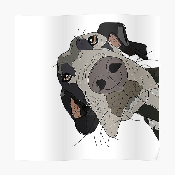 Great Dane In Your Face Dog Poster